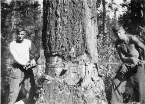 Logging at Camp Brown Creek, Idaho