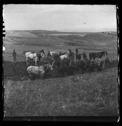 Horse Teams working on the old reservoir (1871-1946)