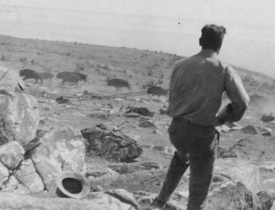 A man shooting at a passing buffalo herd with his rifle.